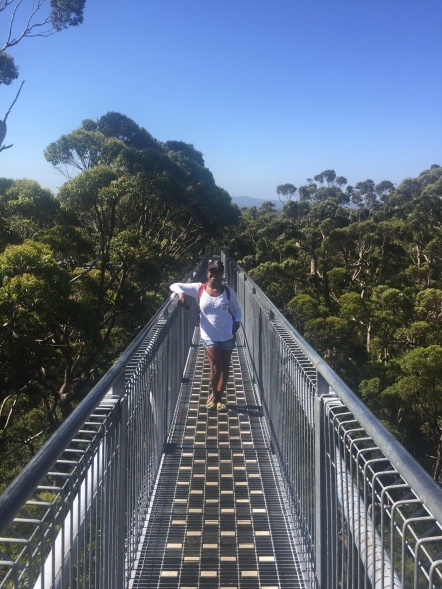 Valley of the Giant Tree Top Walk