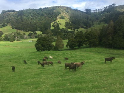 Matakana Countryside