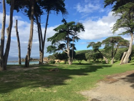 Tawharanui Park Reserve