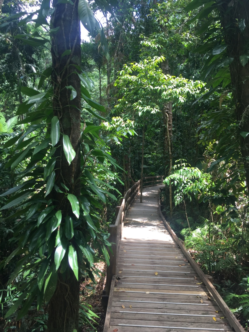 Daintree Forest Boardwalk